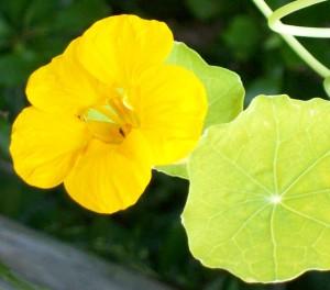 070316 Flower1