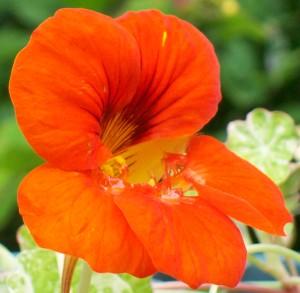 070316 Flower2