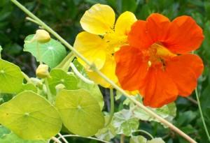 070316 Flower3