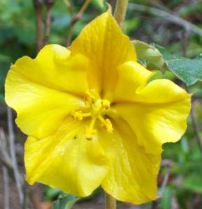 070316 Flower5