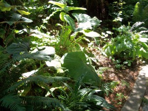 070616 Plant1