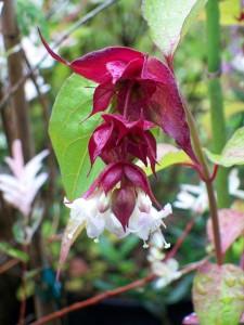 070716 Flower3