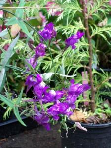 070716 Flower4