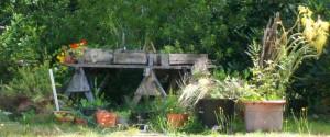 071116 flower Herb Garden