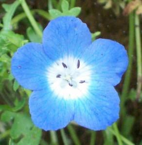 071116 flower1