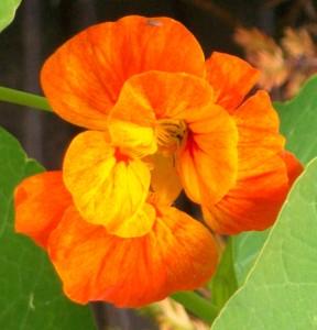 071116 flower2