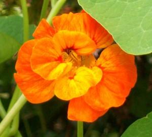 071116 flower3