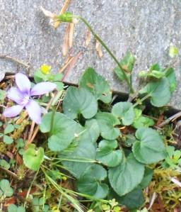 071116 flower7
