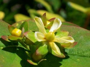 071316 Flower1