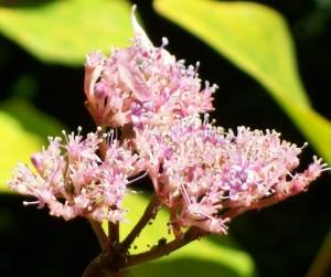 071316 Flower2