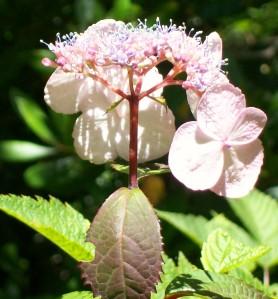 071316 Flower3