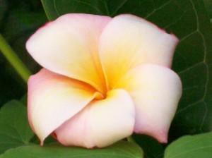 071416 flower2