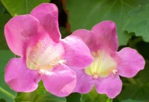 071416 flower3