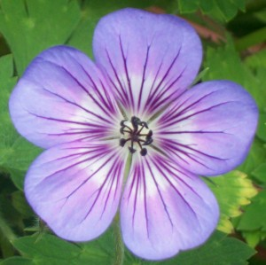 071716 flower