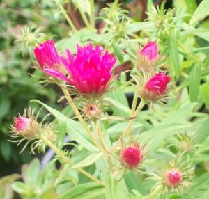 071816 Flower3