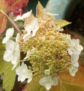 071816 Flower4