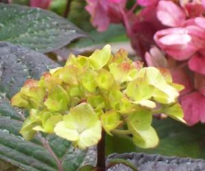 071816 Flower5