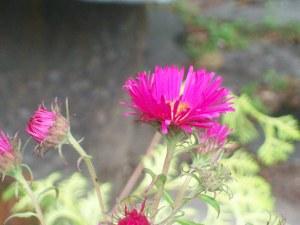 072216 Flower1