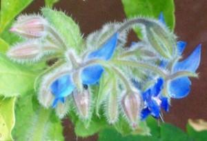 072216 Flower3