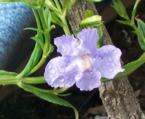 072216 Flower4