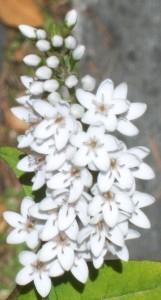 072916 flower1