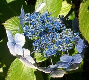 080216 Flower1