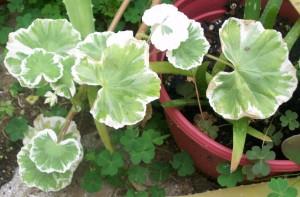 081016 flower01