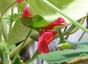 081016 flower06