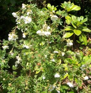 081016 flower13
