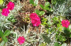 081016 flower15