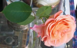 081016 Flower16