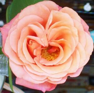 081016 Flower17