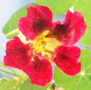 081916 flower