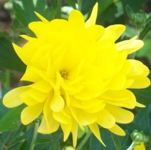 082416 Flower2