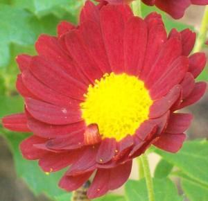 082416 Flower3