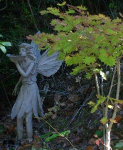 082516 Fairy