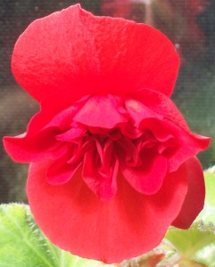 082516 Flower1