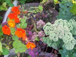 082516 Flower2