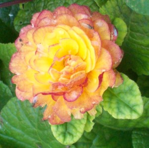 082516 Flower8