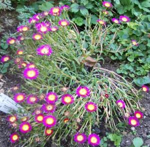 082516 Flower9