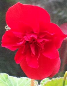 082716 Flower2