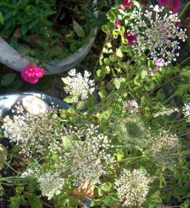 090816-flower01