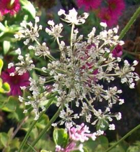 090816-flower01c