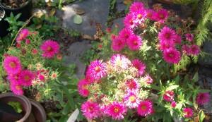 090816-flower02