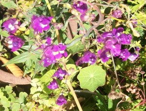 090816-flower03