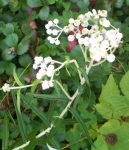 090816-flower05