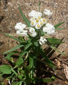 090816-flower06