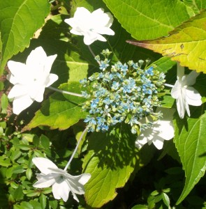 090816-flower07