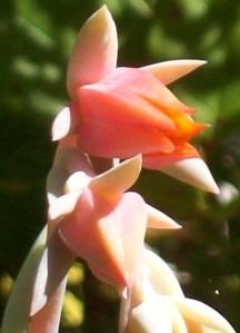 090816-flower10
