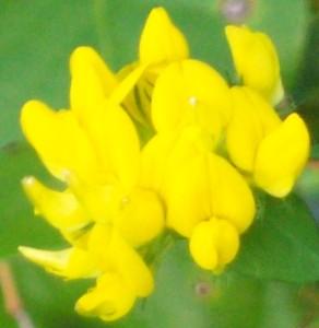 090816-flower12